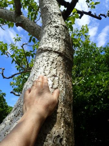樹木の幹にも